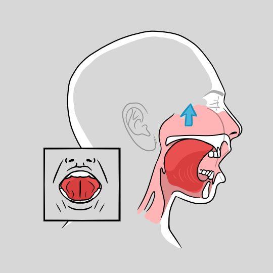 Terapia miofuncional: 16 ejercicios para mejorar el ronquido crónico y la AOS